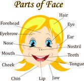 Cartoon child. Girl. Vocabulary of face parts. Vector illustration. Stock Image