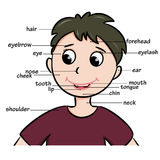 Cartoon child. Vocabulary of body parts Stock Images