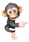 Cartoon Chimp Monkey Pointing Stock Photo