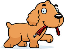 Cartoon Cocker Spaniel Leash Royalty Free Stock Photo