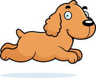 Cartoon Cocker Spaniel Running Royalty Free Stock Photo