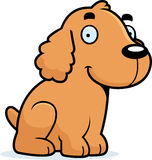 Cartoon Cocker Spaniel Sitting Royalty Free Stock Photos