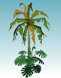 Cartoon coconut tree palm and tropical plant Royalty Free Stock Photo