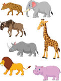 Cartoon Collection animal africa Royalty Free Stock Image
