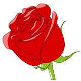 Cartoon color vector flower rose red Stock Image