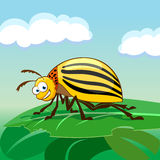 Cartoon colorado potato beetle Stock Photography