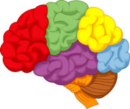 Cartoon colorful brain Stock Images