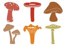Cartoon colorful set mushroom, vector vector illustration