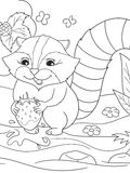 Cartoon coloring book black and white Nature. American, northern raccoon and coon washes strawberries Stock Images