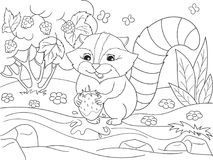 Cartoon coloring book black and white Nature. American, northern raccoon and coon washes strawberries Royalty Free Stock Photos
