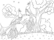 Cartoon coloring for children. A bird, a feather of a bird or a peacock on a tree. Couple in love. Black lines, white background. Vector illustration Royalty Free Stock Photo
