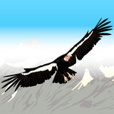 Cartoon Condor Flying. Colorful Background Royalty Free Stock Image