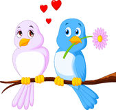 Cartoon couple bird on a branch Royalty Free Stock Photography