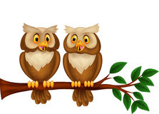 Cartoon couple owl on a branch Stock Photos