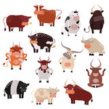 Cartoon cow action set, with cute lovely heifer in different poses vector. Royalty Free Stock Image