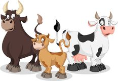 Cartoon cow, calf and bull. Cow family Royalty Free Stock Images