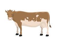 Cartoon cow farm animal vector illustration. Stock Photography