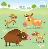 Cartoon cow set: cows, bull and calf bull Royalty Free Stock Images
