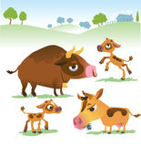 Cartoon cow set: cows, bull and calf bull. Royalty Free Stock Photo