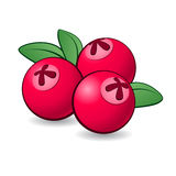 Cartoon cranberry. Stock Photos