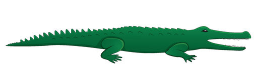 Cartoon crocodile. Eps10 vector illustration Stock Photos