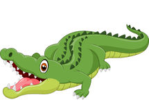 Cartoon crocodile. Illustration of Cartoon crocodile on white background Royalty Free Stock Image