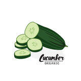 Cartoon  cucumber. Ripe green vegetable. Vegetarian delicious. Eco organic food.  Flat vector design, isolated on white background. Cartoon  cucumber.  Ripe Royalty Free Stock Photos