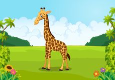 Cartoon cute giraffe posing Royalty Free Stock Photography