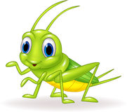 Cartoon cute green cricket isolated on white background Stock Photos