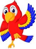 Cartoon cute parrot Royalty Free Stock Photography