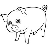 Cartoon cute pig coloring page vector. Illustration Royalty Free Stock Photo
