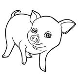 Cartoon cute pig coloring page vector. Illustration Stock Image