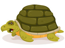 Cartoon Cute Turtle Character Stock Photos