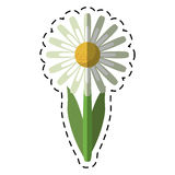 Cartoon daisy floral garden spring Stock Image