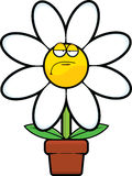 Cartoon Daisy Grumpy Royalty Free Stock Photo