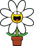 Cartoon Daisy Happy Royalty Free Stock Photo