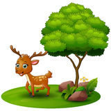 Cartoon Deer Under A Tree On A White Background Stock Photo