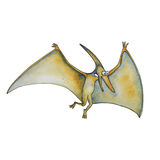 Cartoon dinosaur Pterodactyl in watercolor style. Pterodactyl Dinosaur Of Jurassic Period, Prehistoric Extinct Giant Reptile. Fossil animals and reptiles in Royalty Free Stock Photo
