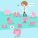 Cartoon doctor with organ Stock Image