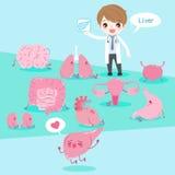 Cartoon doctor with organ Royalty Free Stock Image