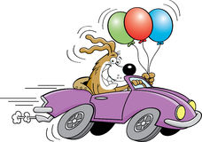 Cartoon dog in automobile holding balloons. Royalty Free Stock Photography