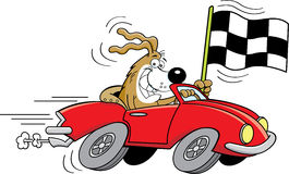 Cartoon dog in a car waving a checkered flag. Royalty Free Stock Photo