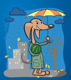 Cartoon dog character with umbrella and watermelon Stock Images
