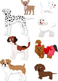 Cartoon dog collection Stock Photos