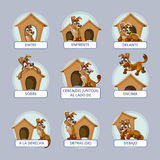 Cartoon dog in different poses to illustrate