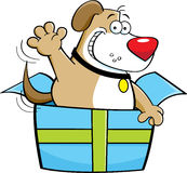 Cartoon dog inside a gift box. Stock Images
