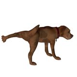 Cartoon Dog - Leg Lift Stock Images