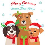 Cartoon Dog With Santa Hat And Christmas Text Vector Card For Your Christmas Greeting Cards, Invitations. royalty free illustration