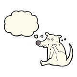 Cartoon dog scratching with thought bubble Royalty Free Stock Photography