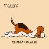 Cartoon dog shows yoga pose Ashtanga Namaskara. Surya Namaskara. San Salutation. Beagle  illustration Royalty Free Stock Image